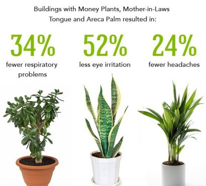 Get Fresh Air At Home With Easy Indoor Plants