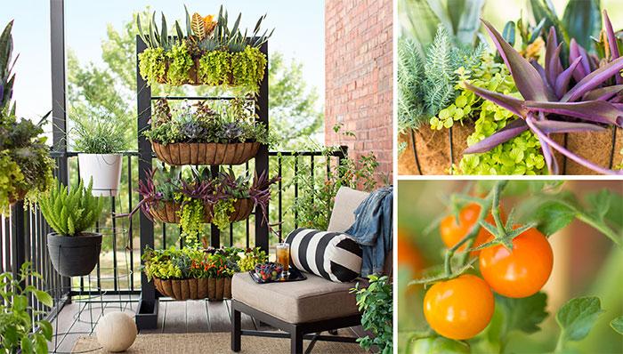 8 Tips for beautiful balcony garden - Doomsday